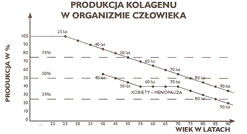 Rys. Uproszczony schemat obrazujący produkcję kolagenu w ustroju (autor: J. Sułyk)