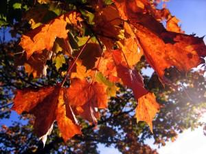 leaves-578903_1920