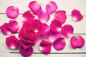 napar z liści róży